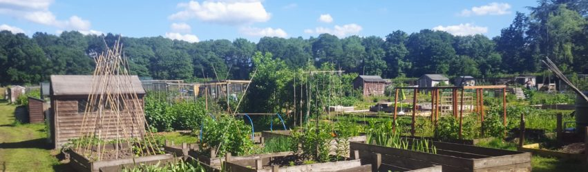 Elstead Allotment 1