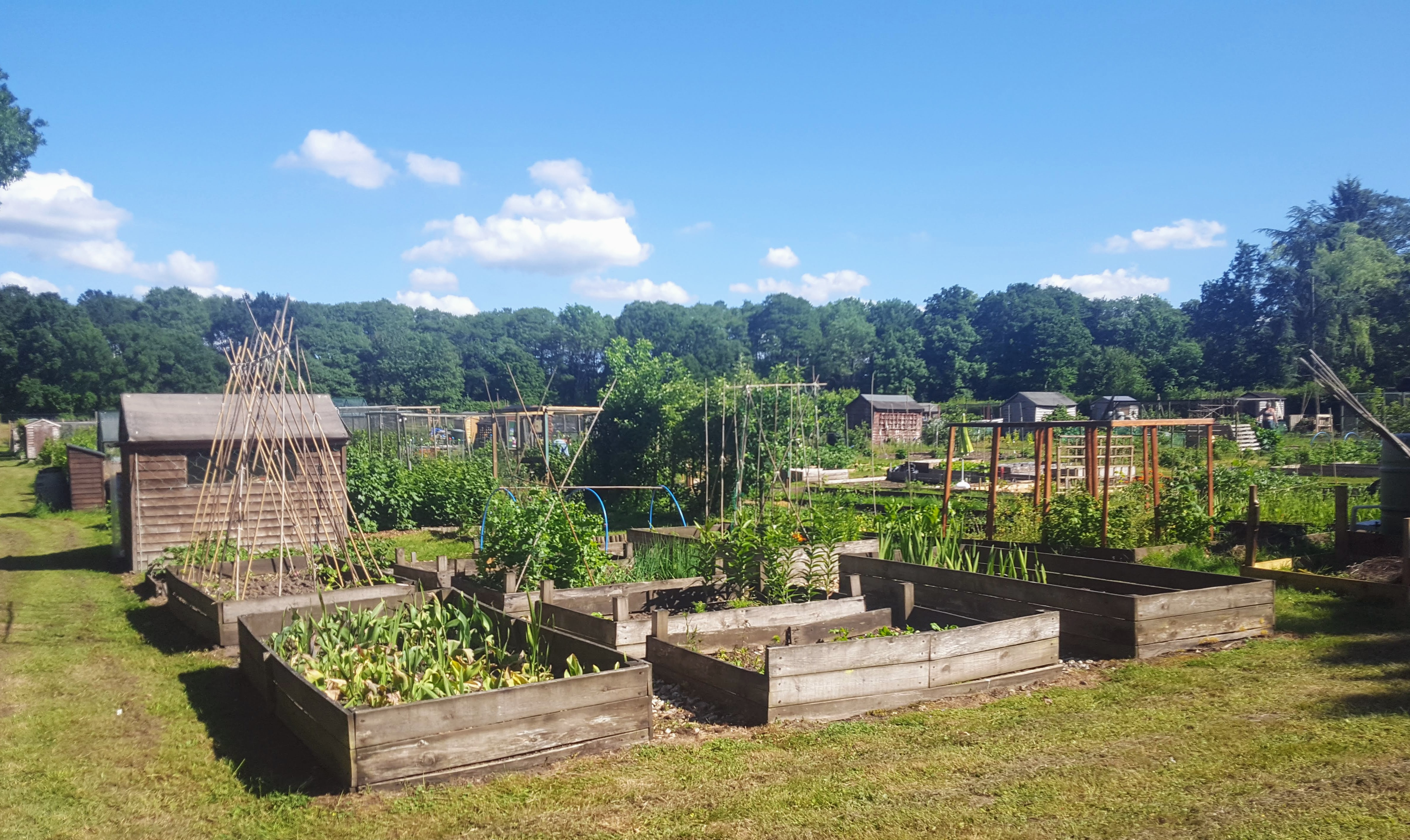 View of some of the Elstead Allotment plots.