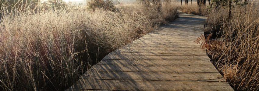 Boardwalks on Thursley NNR.