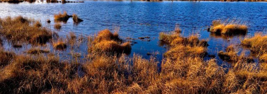 Dunmore Pond james giles pic