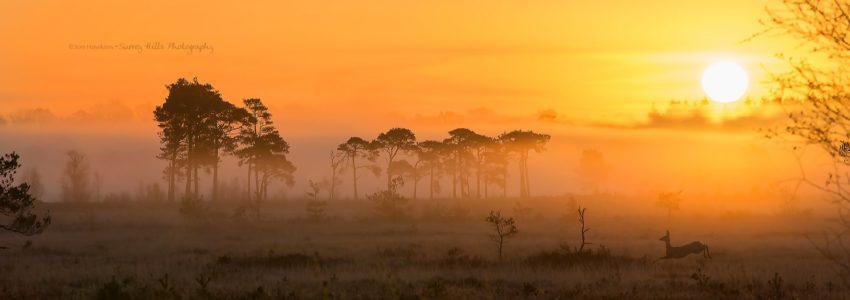 Thursley NNR at sunset looking like an African plain.
