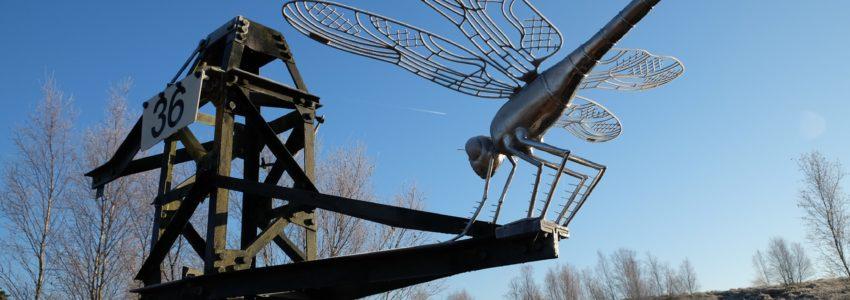 Thursley NNR dragonfly Mark Schulp
