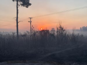 Read more about the article Thursley Common – Fire update