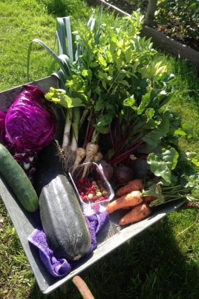 Allotment veg