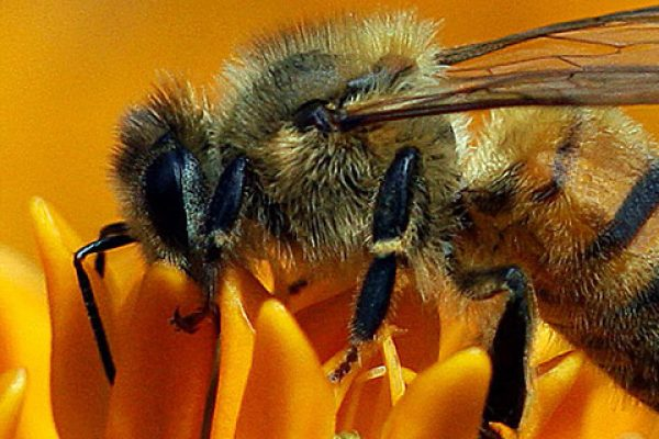 Elstead Beekeepers