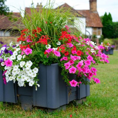 A close up photo of a grey planter with pink, white and purple petunias, together with red flowers and green grasses. The forge cottage is out of focus behind it.